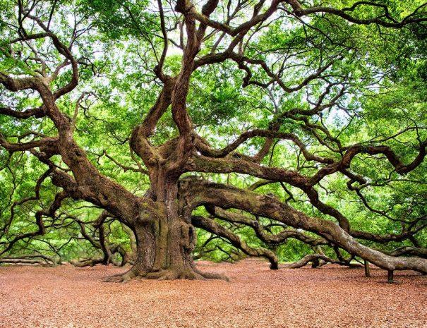 oak-tree-2018822_1280